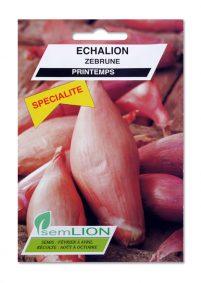 ECHALION ZEBRUNE (spécialité)