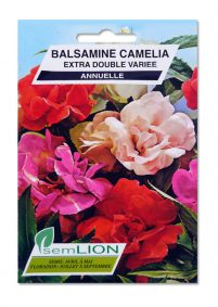 BALSAMINE CAMELIA EXTRA DOUBLE VARIE