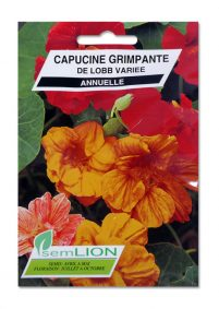 CAPUCINE GRIMPANTE DE LOBB VARIEE