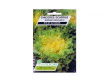 CHICOREE SCAROLE GROSSE BOUCLEE 2