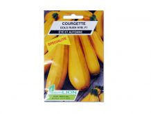 COURGETTE GOLD RUSH (hybride) F1